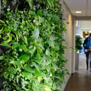 LivePanel: indoor groene gevel