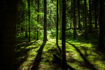 Ecologische tuin- en bouwmaterialen voor de toekomst